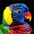 самолюбивый попугай