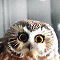 созерцательная сова